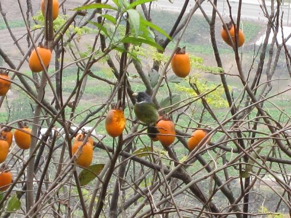 橙子绿叶唯美风景图片