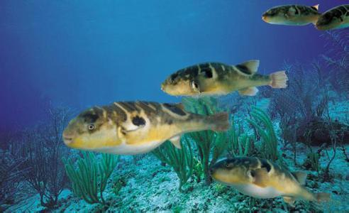 壁纸 动物 海底 海底世界 海洋馆 水族馆 鱼 鱼类 492_300